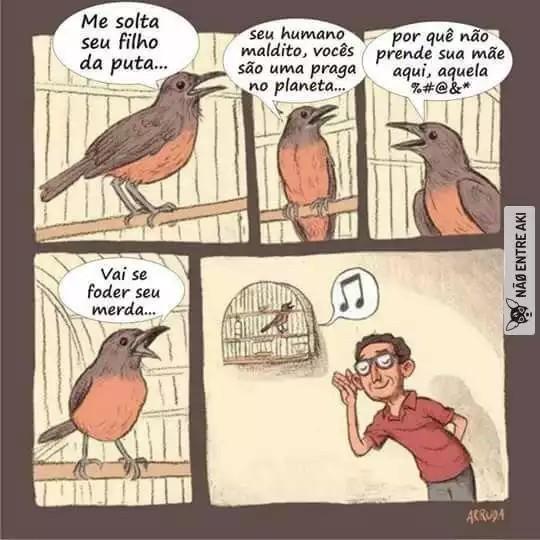 Que lindo o canto dos pássaros... Repost não passaram - meme