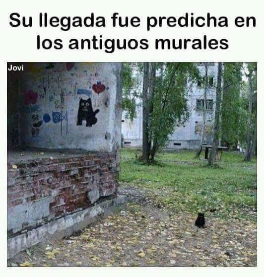 Alabado sean el Sr. gato - meme