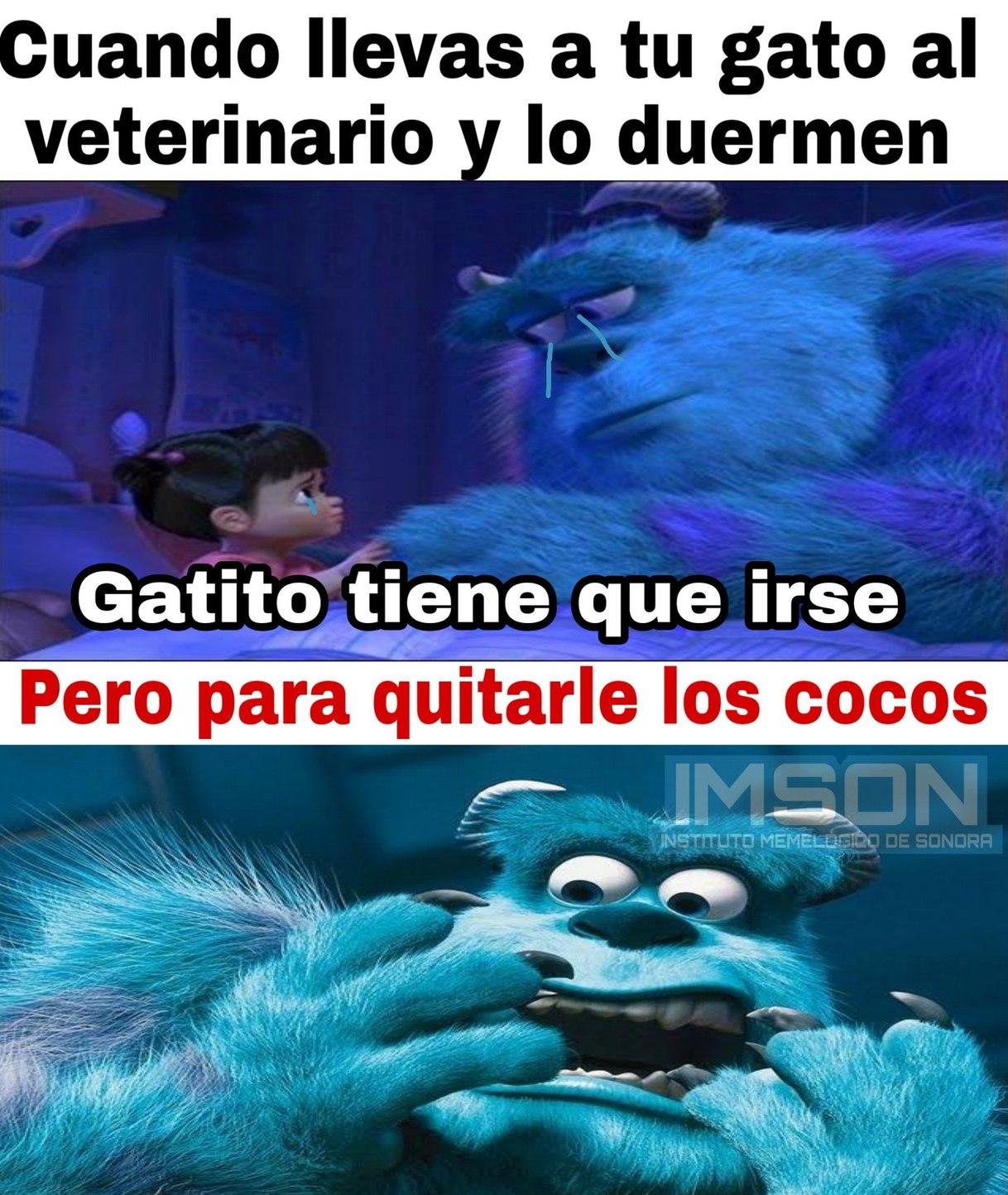 Cocos - meme