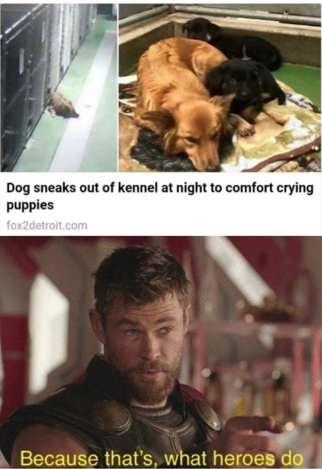 Dog sneaks out of kennel at night to comfort crying puppies - meme