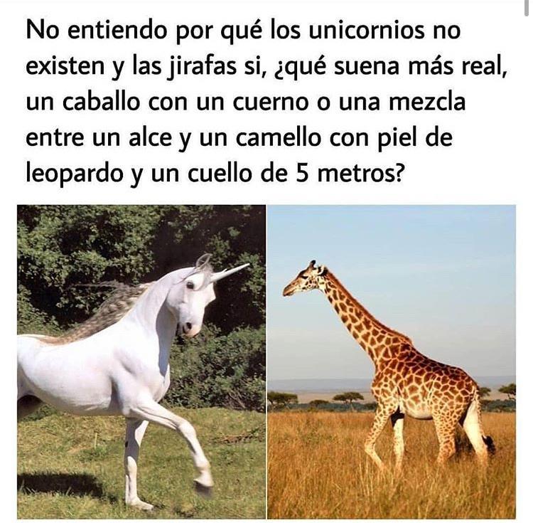 ja ja guirafa Xd - meme
