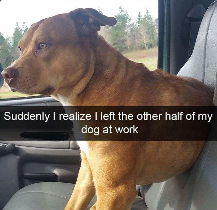Half doggo - meme