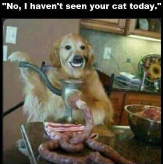 """""""Não, eu não vi seu gato hoje"""" - meme"""