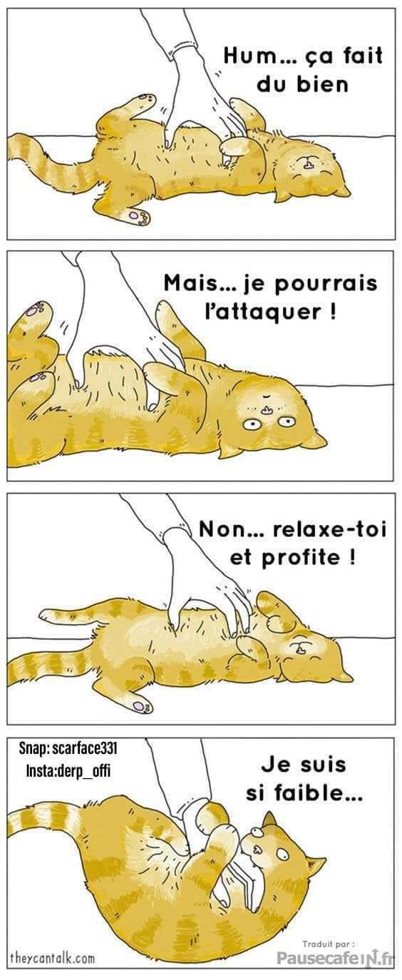 Miaou - meme