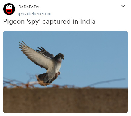 Pigeon 'spy' captured in India - meme