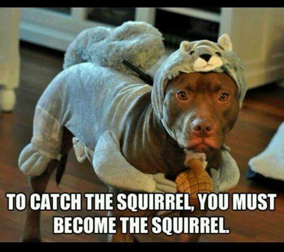 down with the squirrel - meme