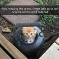 cat hideout