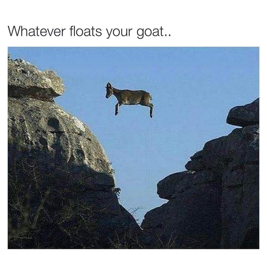 goat life - meme