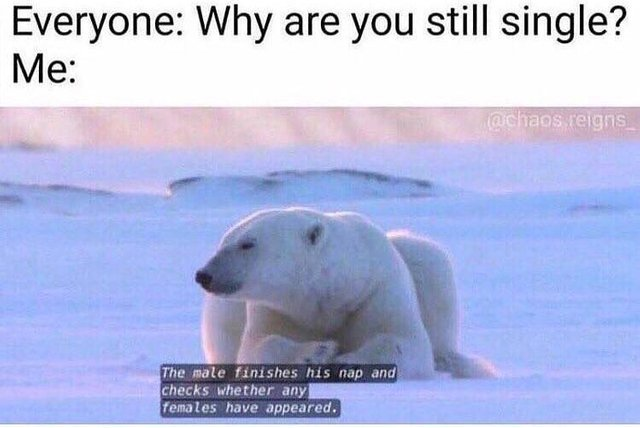 Why are you still single? - meme