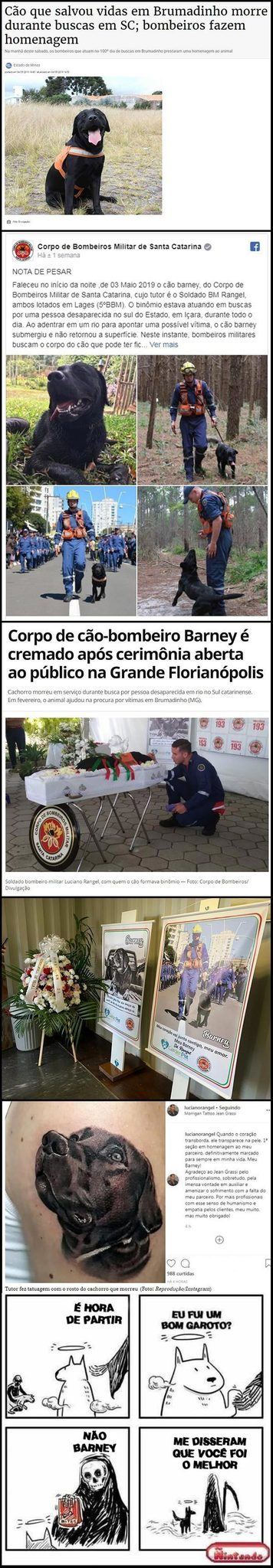 DE NADA PELOS MEMES, AGORA SEGUE MINHAS CONTAS AI >:) TAGS**