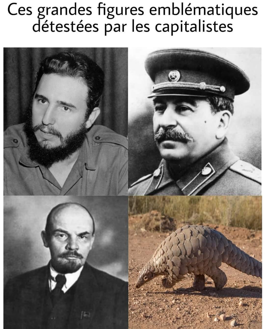 Citer les - meme