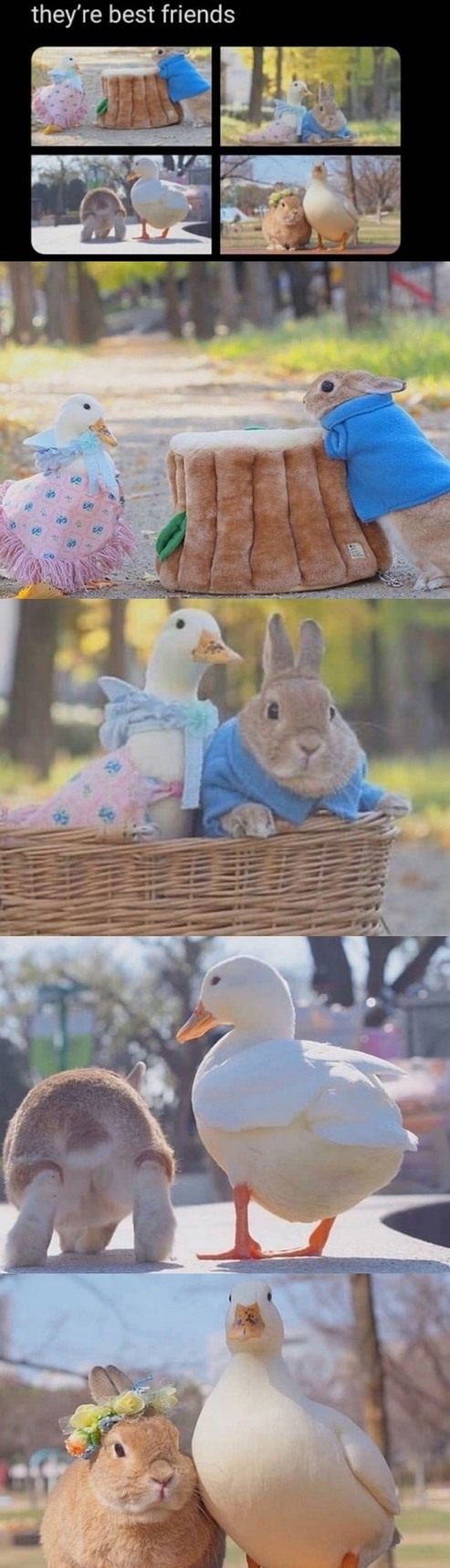 bugs bunny and daffy duck irl - meme