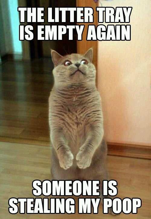 Stealing cats poop - meme
