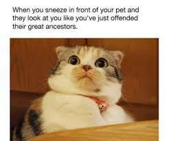 Sneezing - meme