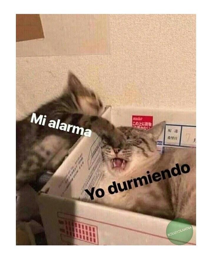 Todas las mañanas - meme
