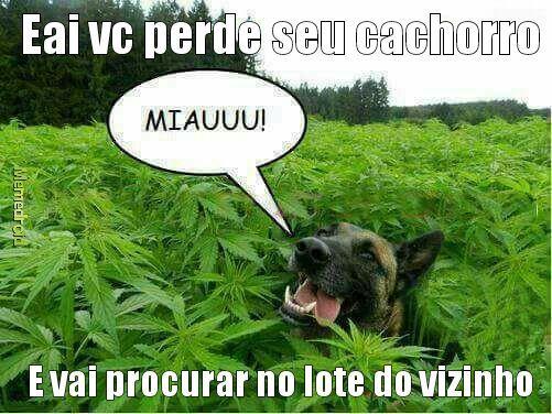 Cachorro-maconha - meme