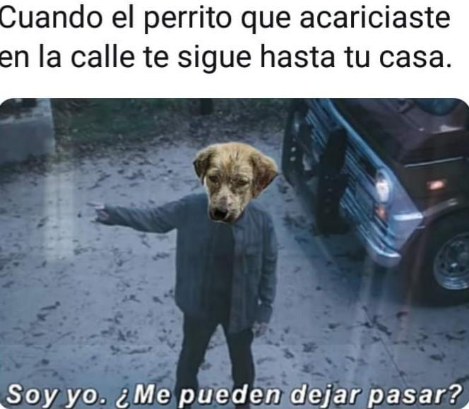 Lo siento perrito - meme