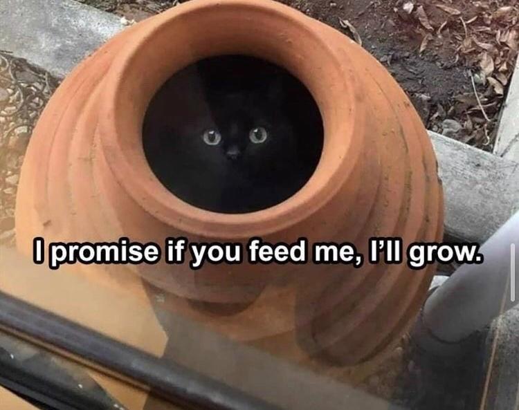 ah yes the catnip plant - meme