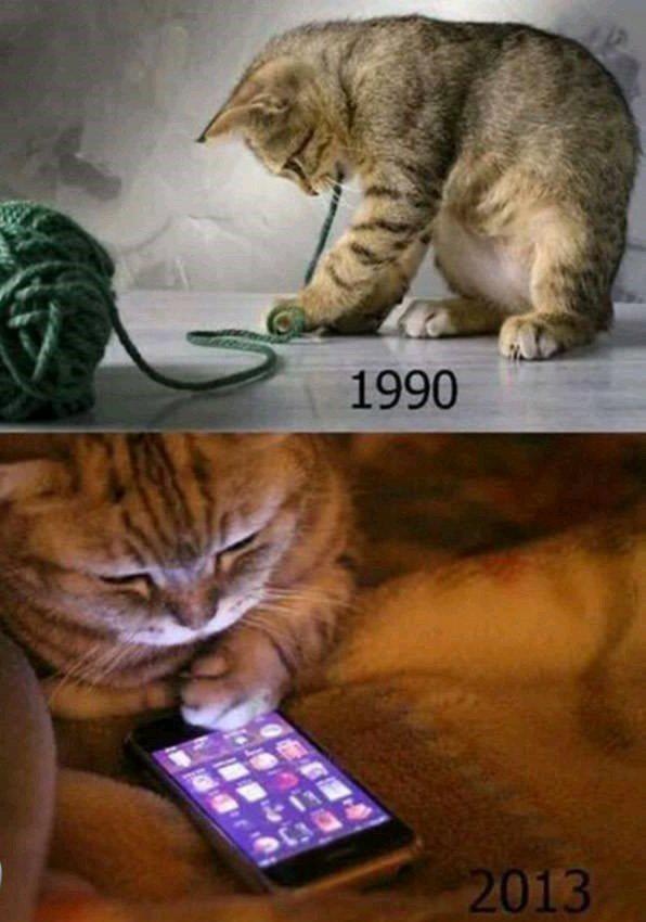 Cat's new generation - meme