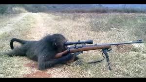 sniper monky - meme