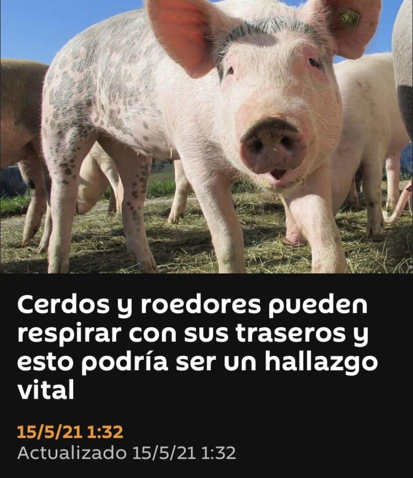 cerdos respiren por el de atrás, siempre soñaron con eso - meme