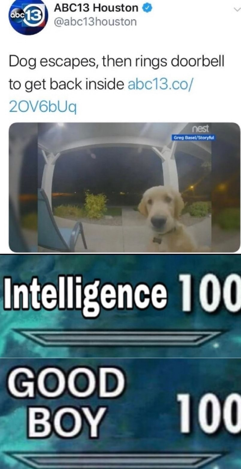 intelligent good boy - meme