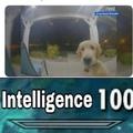intelligent good boy