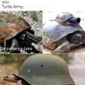 title likes turtles