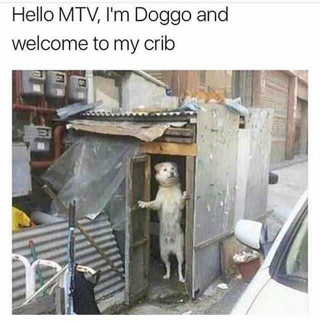 Dog crib - meme