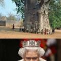 """A Rainha Elizabeth é mais velha até com essa """"Árvore da Vida"""""""