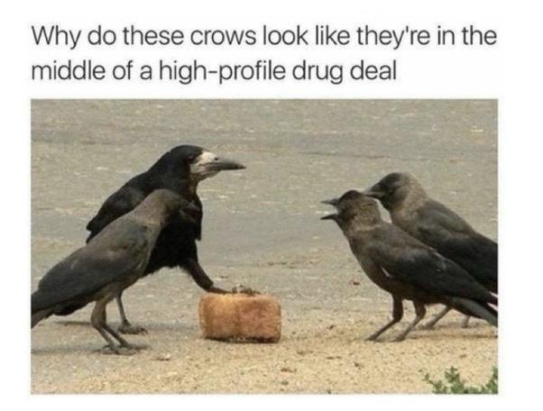 snitches get stiches - meme