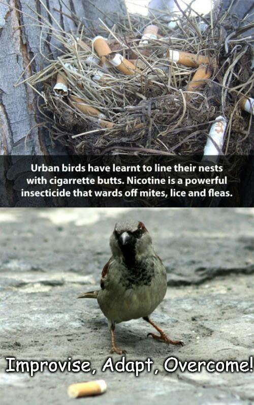 Bear Grylls bird - meme