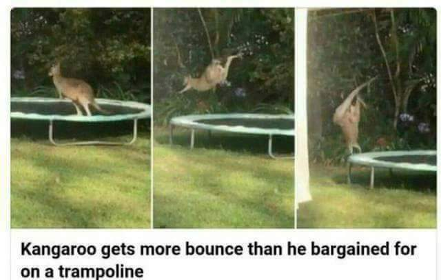 Big bounce - meme