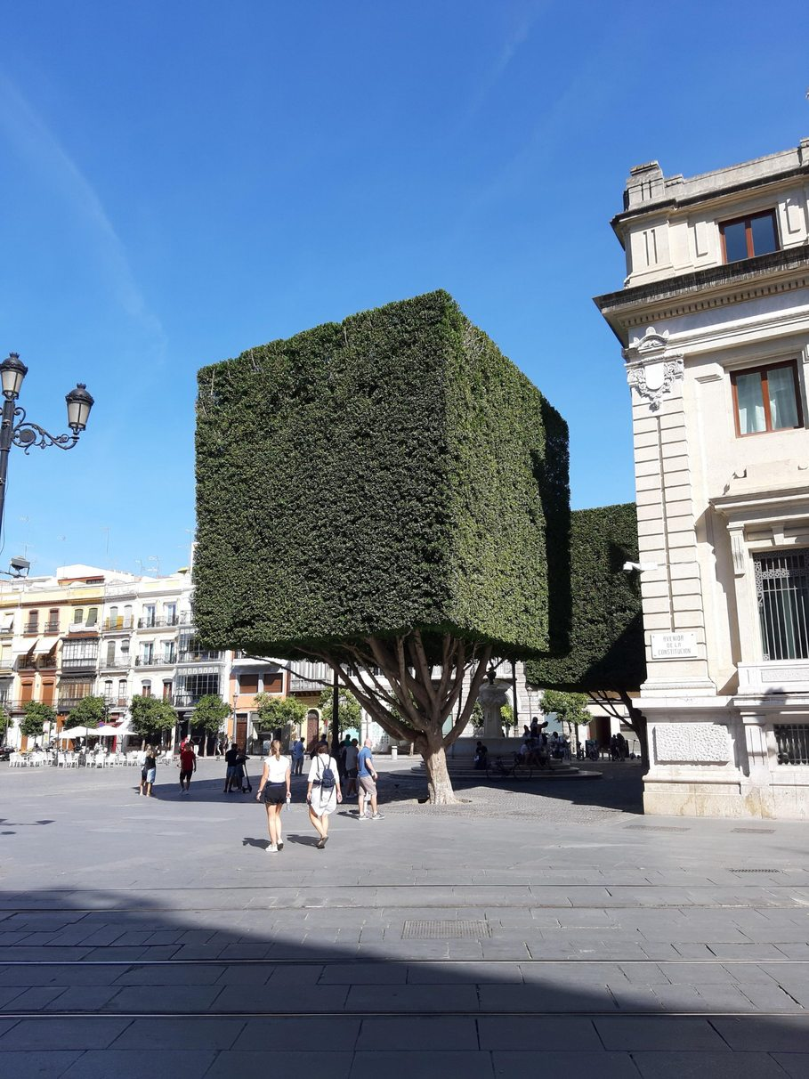 Minecraft tree in real life - meme