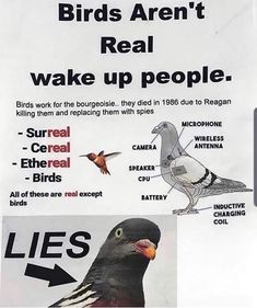 Birds Aren't Real - meme