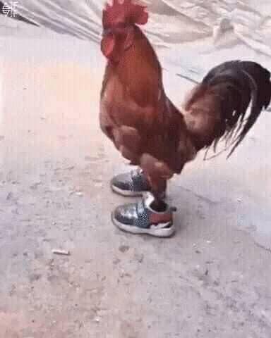 El Gallo McQueen - meme