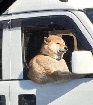 buff doge - meme