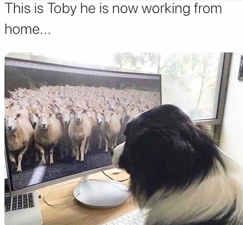 Work from home doggos - meme