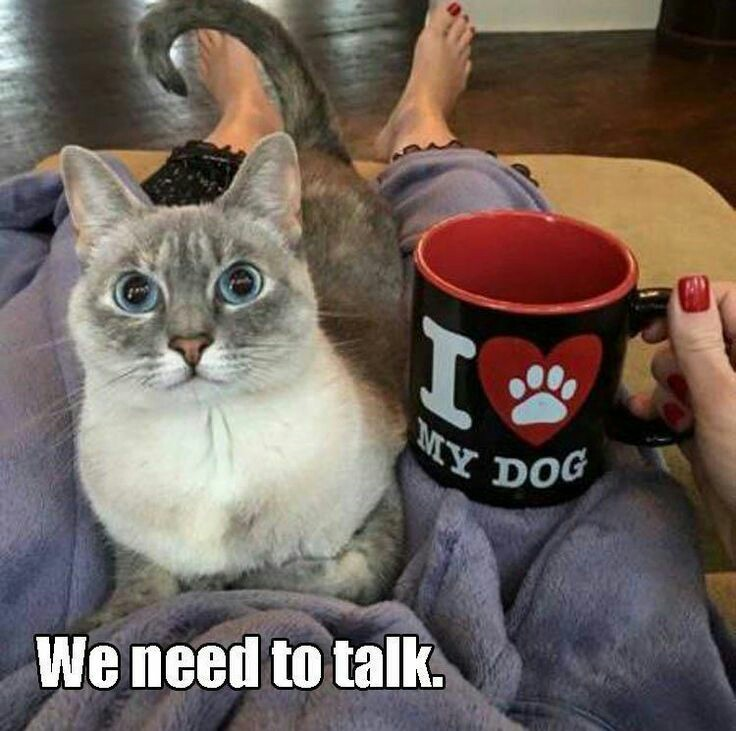 Yes ? And what should we talk about ? - meme