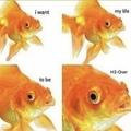 life of a fish