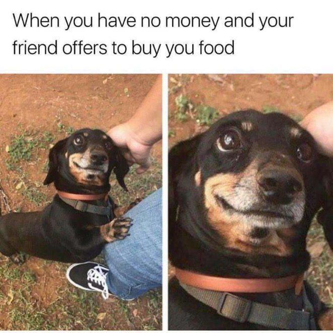 I'm the dog - meme
