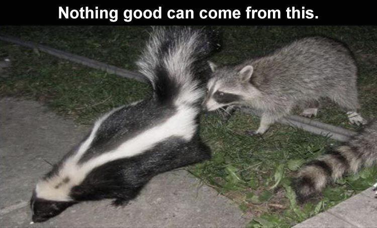 skunk - meme