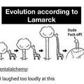 Evolution of giraffes