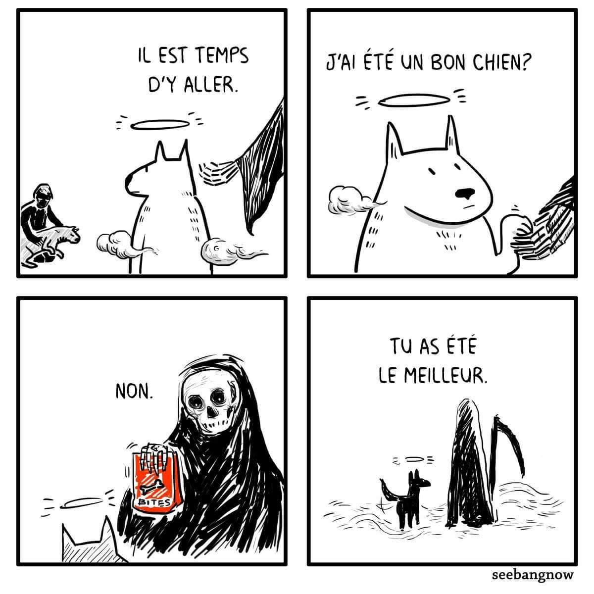 Croquettes - meme