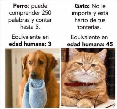 Los gatos son mejores ฅ^•ﻌ•^ฅ - meme