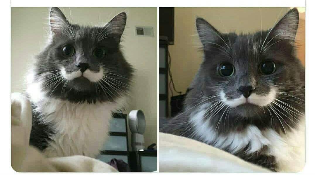 Je vous présente ! Mr moustache - meme