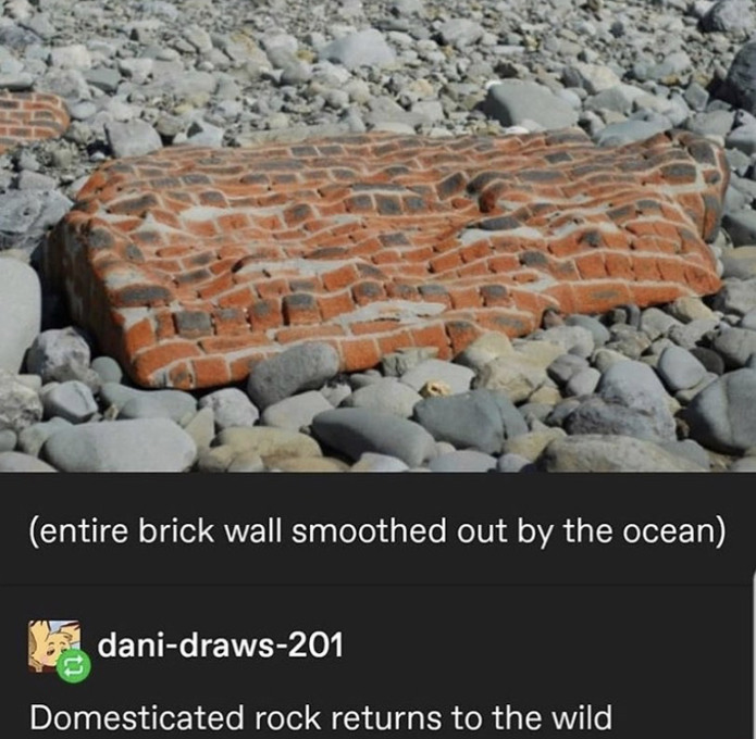 the domestic rock - meme