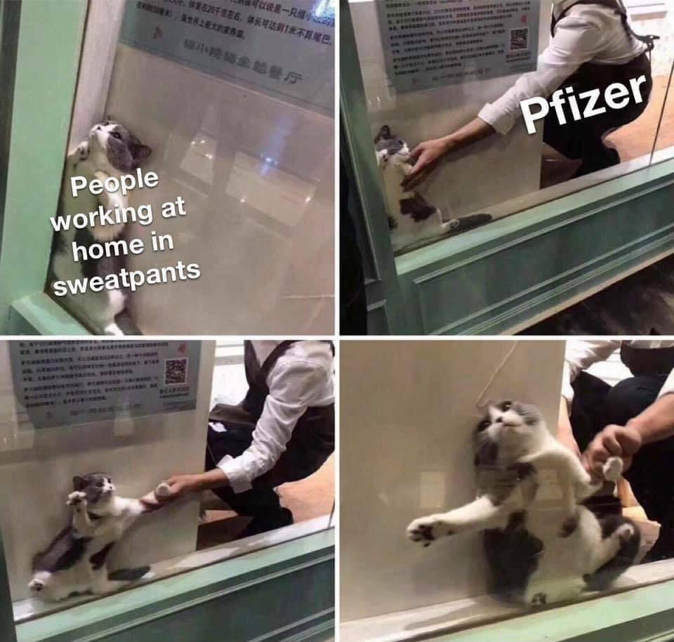 Those working from home before the pandemic: *shoves cat toward  Pfizer for science* - meme