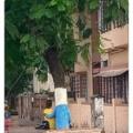 Como se llamaba el alien que es un árbol