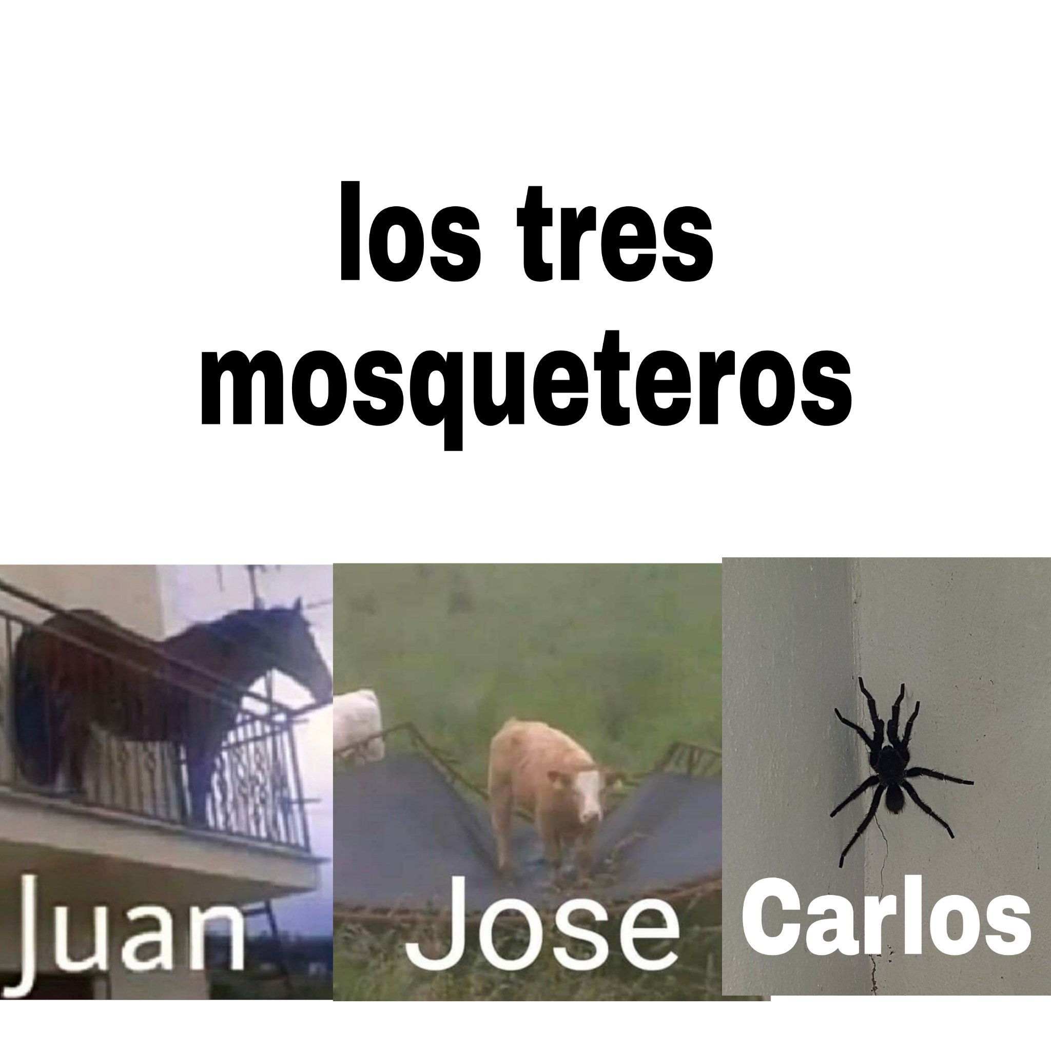 Fusion de animales raros - meme
